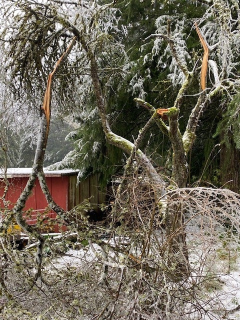 Typical tree damage from ice storm